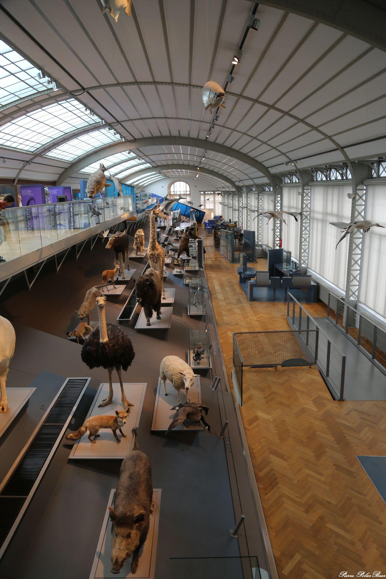 MUSEUM-HIST-NAT-B-11
